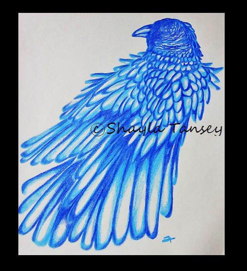 shayla crow 2014-03-07_1023
